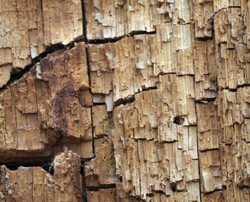 arbol con termitas