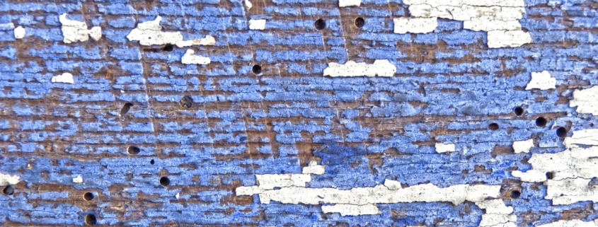 madera azul con carcoma